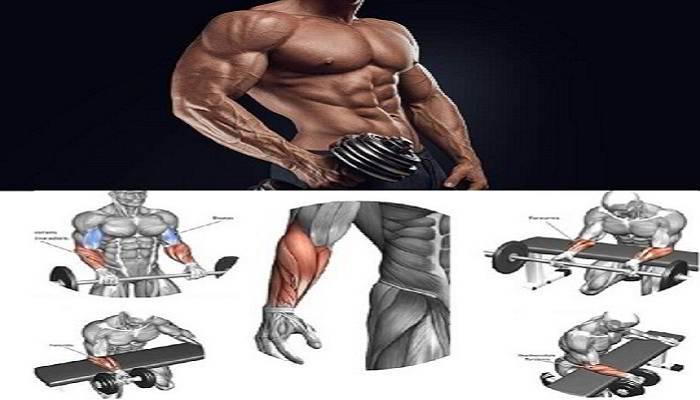 कलाई और फोरआर्म्स मोटी करने की एक्सरसाइज - Forearms and Wrist Exercise in Hindi
